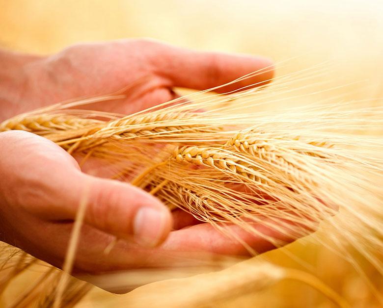 Skup zbóż